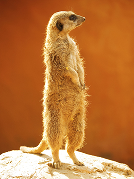 om The Meerkat Group